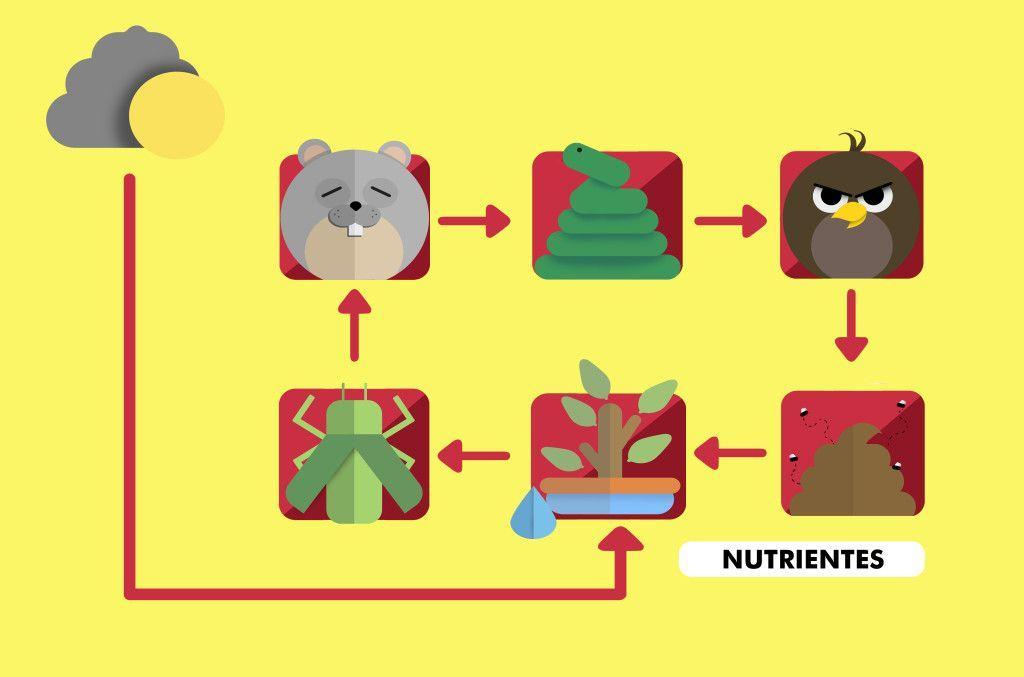 Cadeia alimentar. Ilustração: Todo Estudo.
