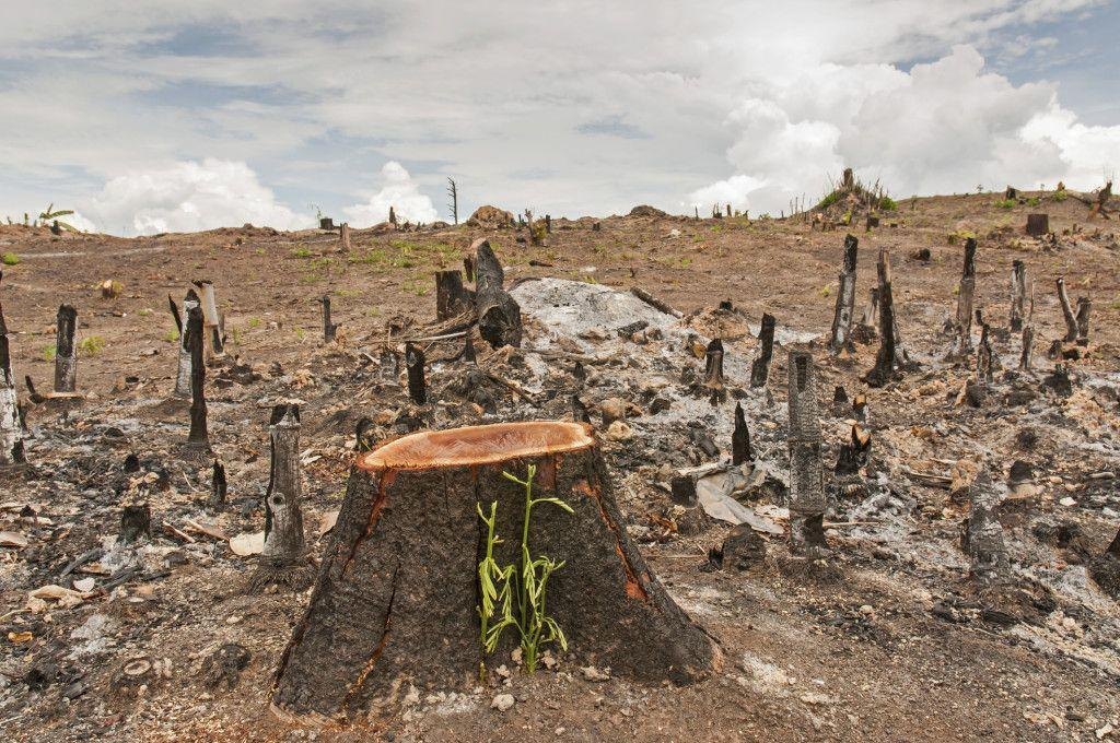 Deforestations effects on animals