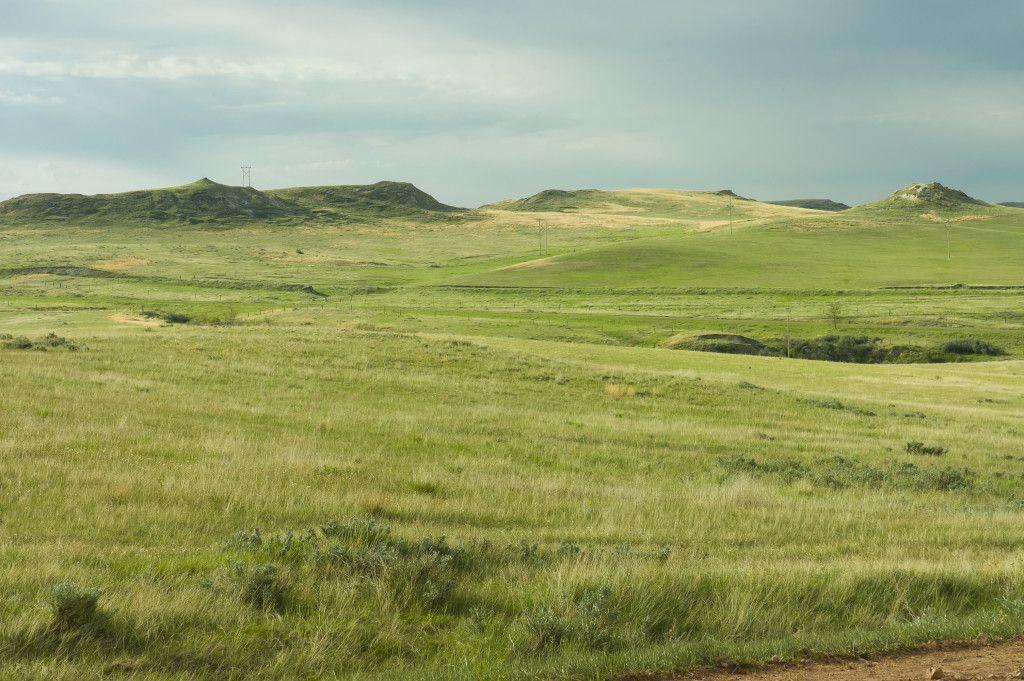 Loba Das Estepes: Biomas Terrestres: Tipos, Características (resumo Completo