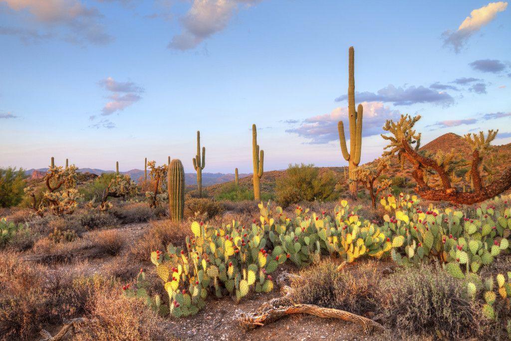 Vegetação típica do deserto. Foto: Getty Images