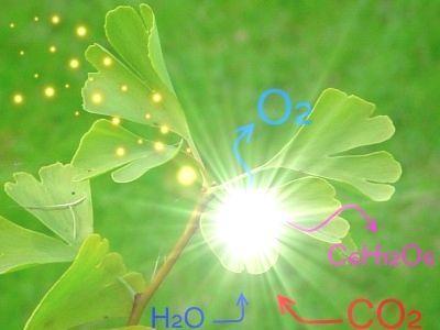 Representação da fotossíntese. Imagem: Wikimedia Commons.