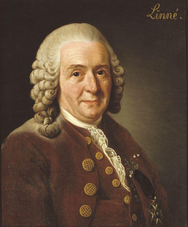 Carolus Linnaeus, criador do método binomial para os nomes das espécies.
