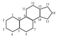 Ciclopentanoperidrofenantreno, estrutra presente em esteroides. Imagem: Wikimedia Commons.
