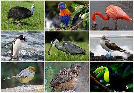 Diversidade de aves. Imagem: Wikimedia Commons.