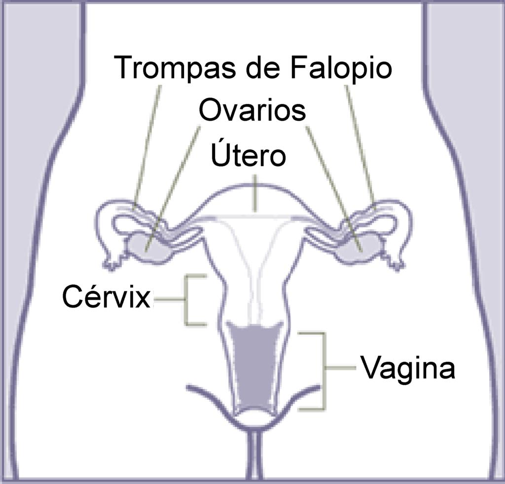 Your idea wikimedia commons vagina fotos phrase