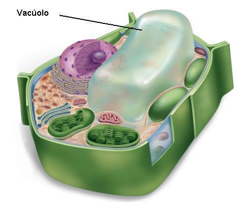 Resultado de imagen de vacuolos