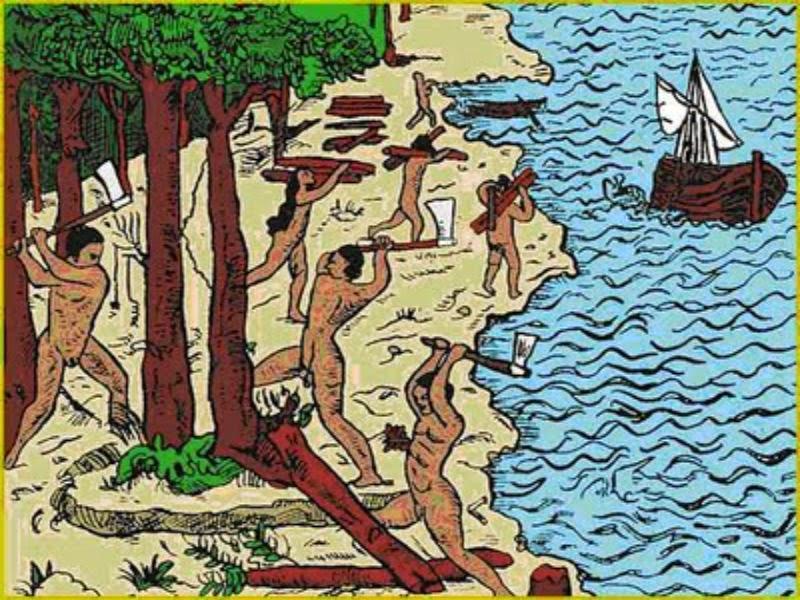 Resultado de imagem para madeira pau brasil cabral