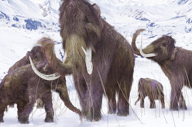 idade dos mamíferos