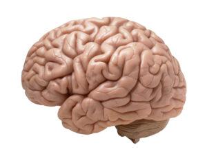 nervos do corpo humano
