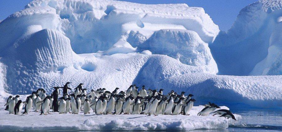 Resultado de imagem para Antartida fotos