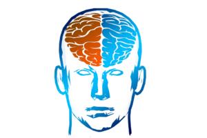 cérebro hemisférios